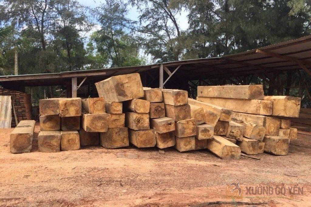 Cây Bạch Tùng được xẻ gỗ và sấy khô để làm thanh gỗ cho chim yến làm tổ